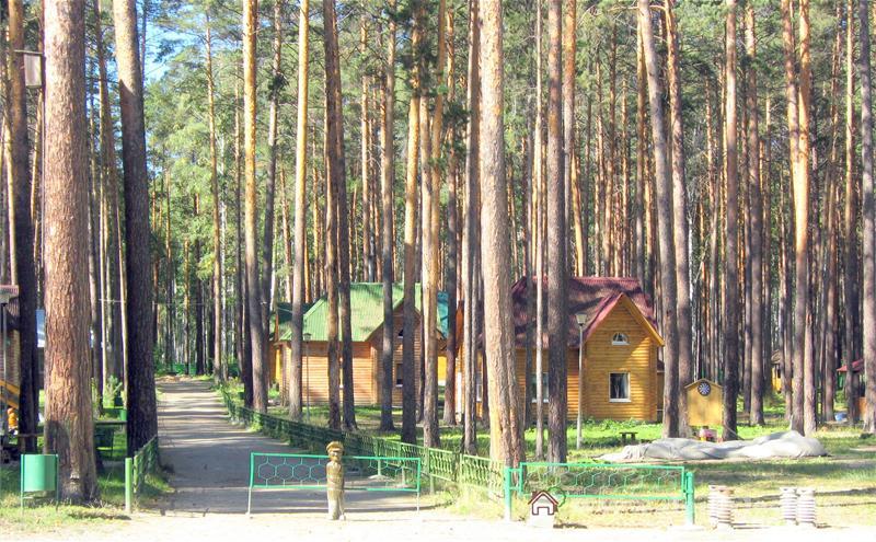 Фото зеленый бор боровое